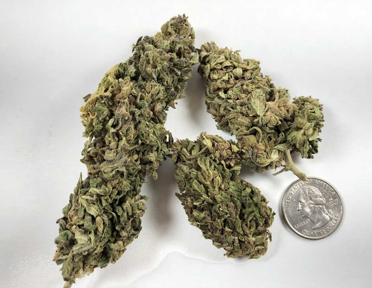 CBD Hemp Direct big buds