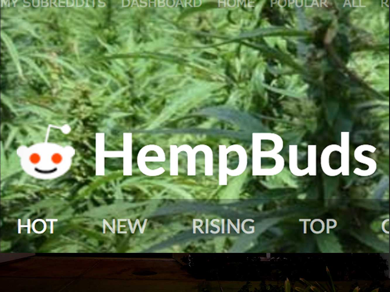 HempBuds at Reddit - come check it out