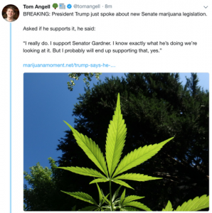 Breaking News: Trump Says He Supports Senate Marijuana Legislation