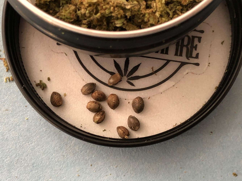 Boston Hempire - Suver Haze - seeds