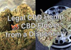 Hemp vs CBD Flower