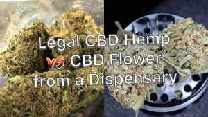 Hemp vs CBD Flower
